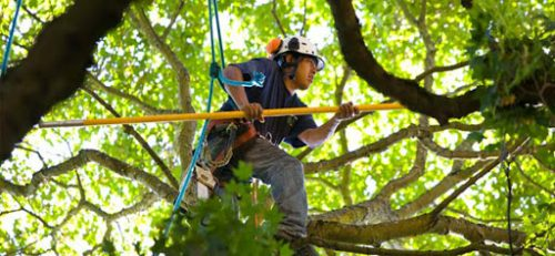 Do You Need Plano Texas Tree Service?