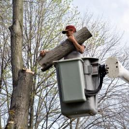 Orlando FL Tree Removal